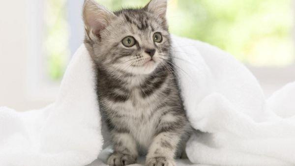 猫感冒了怎么办